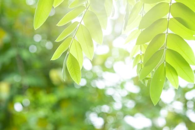 Mooie groene bladeren op een takje en zonlicht in foret.