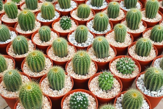 Mooie groene cactusinstallatie in bruine bloempot voor achtergrond