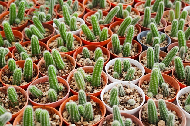 Mooie groene cactusinstallatie op bloempotachtergrond