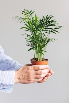 Mooie groene indoor dypsis bloem in een pot in mannelijke handen op een witte muur achtergrond