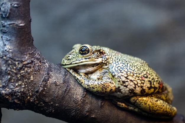 Mooie groene kikker op een tak, macrofoto.