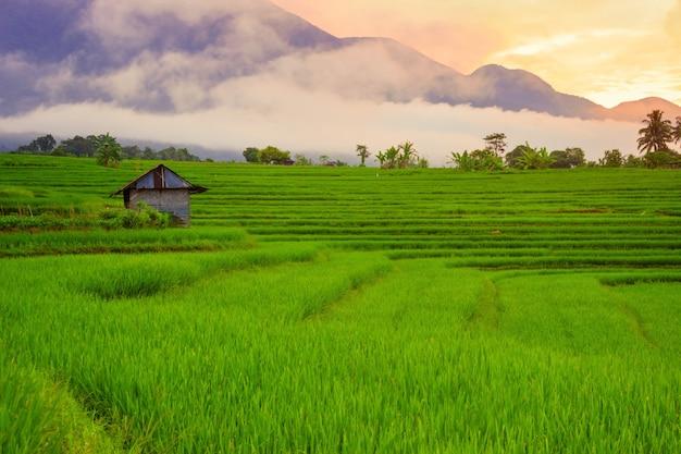 Mooie groene rijstvelden met hemelzonsopgang in de ochtend met mooie bergketens in bengkulu, indonesië, azië