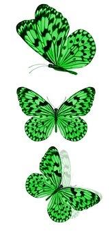 Mooie groene tropische vlinders geïsoleerd op een witte achtergrond. motten voor ontwerp