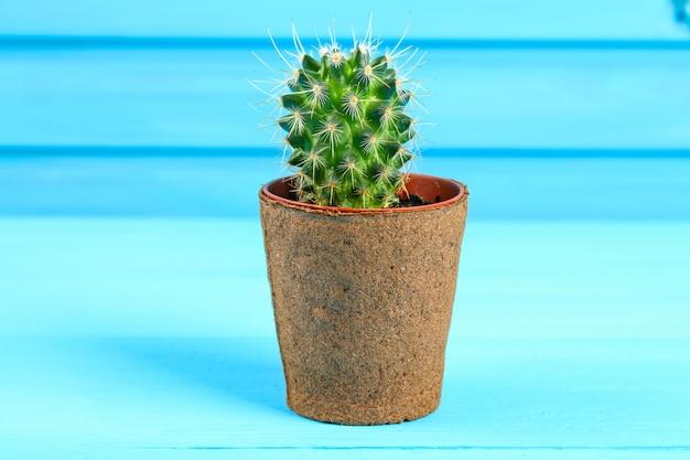 Mooie grote groene cactus in een baksteenpot tegen de blauwe houten muur