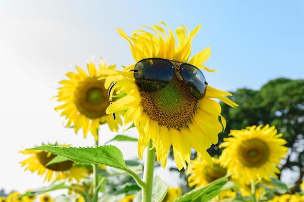 Mooie grote zonnebloem in de tuin.
