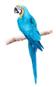 Mooie handgeschilderde aquarel vogel papegaai op papier.