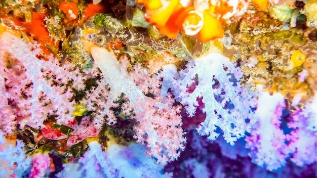 Mooie, helder kleurrijke zachte koralen in grot, malediven.