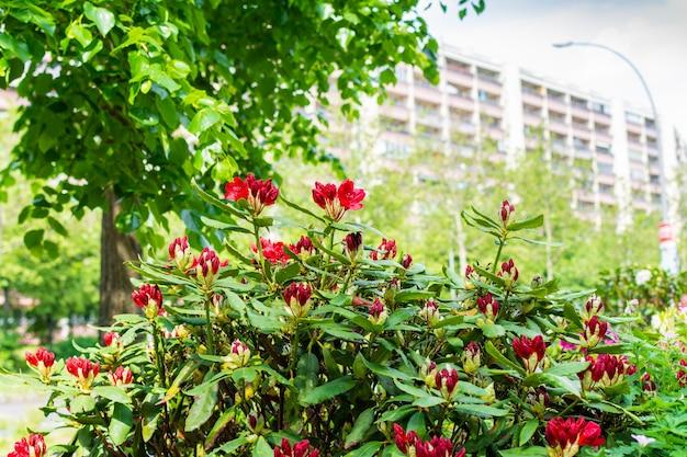 Mooie heldere kleuren van de stad, landschapsarchitectuur en bloemendecoratie van het stadslandschap