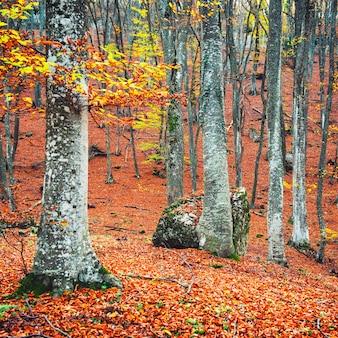 Mooie herfst bos in het park met gele en rode bomen