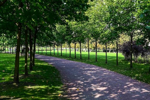 Mooie herfst steegje. oranje park. oranje park. mooie herfst steeg. mooi pad tussen bomen.
