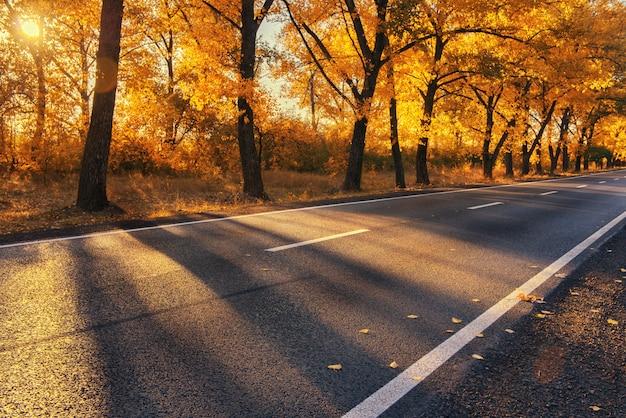 Mooie herfst weg
