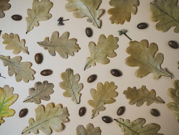 Mooie herfstachtergrond met eikenbladeren en eikels, kopieer ruimte
