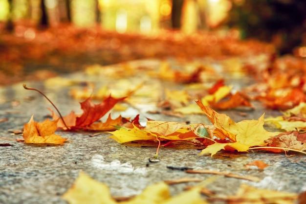 Mooie herfstachtergrond met gele en rode bladeren.