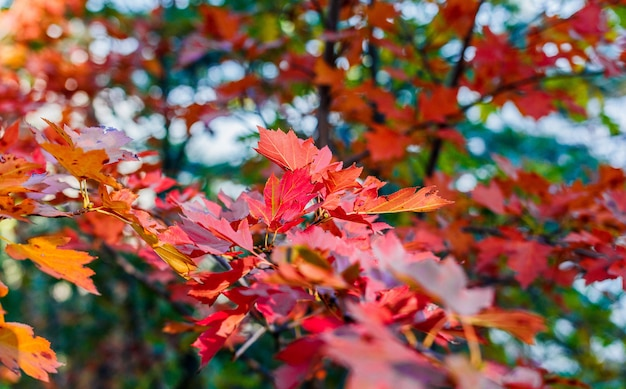 Mooie herfstbladeren, herfst bos in de bergen