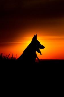 Mooie hond bij de zonsopgang met blauw en oranje silhouet als achtergrond