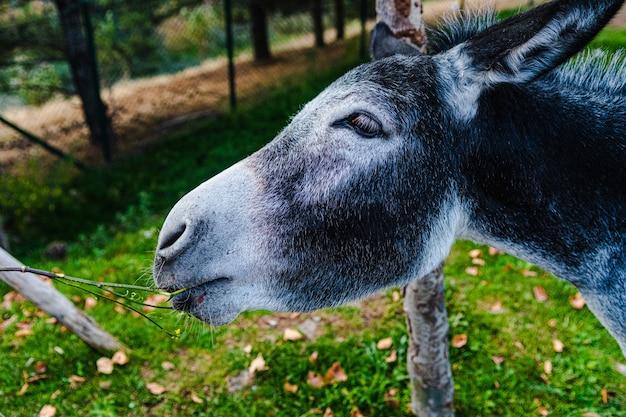 Mooie horizontale shot van een zwarte ezel met witte snuit