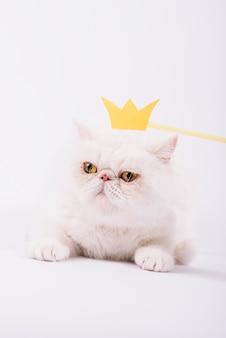 Mooie huisdierensamenstelling met slaperige witte kat