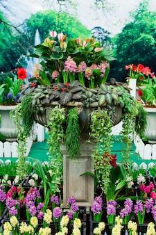 Mooie hyacintenbloem en blad in grond