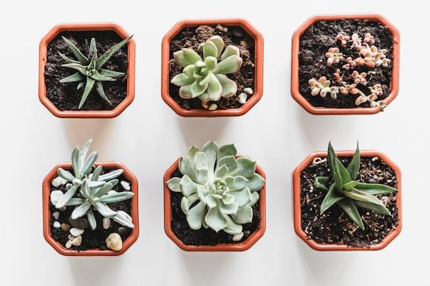 Mooie ingemaakte succulente planten op een witte tafelblad weergave