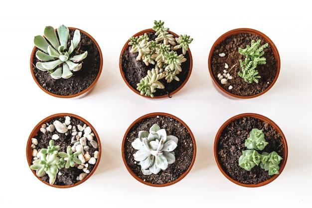 Mooie ingemaakte succulente planten op witte tafelblad weergave