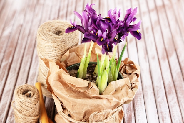 Mooie irissen en tuingereedschap op houten tafel