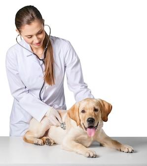 Mooie jonge dierenarts met een hond op een witte achtergrond