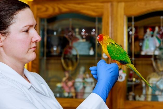 Mooie jonge dierenarts voedende papegaai in dierenartskliniek