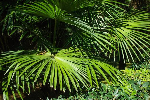 Mooie jonge palmbladeren