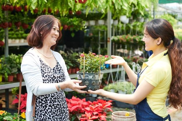 Mooie jonge plantenmarktmedewerker die pot met bloeiende bloem verkoopt, gelukkige vrouw van middelbare leeftijd