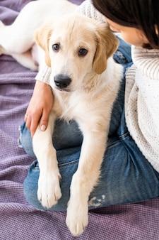 Mooie jonge retrieverhond thuis in de armen van de eigenaar
