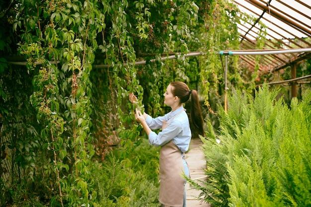Mooie jonge tuinman die voor de klimplant van virginia in serre zorgt