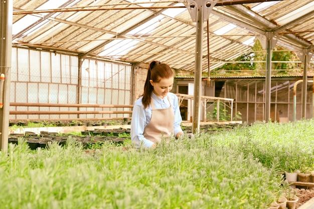 Mooie jonge tuinman die voor decoratieve planten in kas zorgt