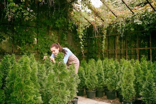 Mooie jonge tuinman die voor jonge thuja-planten zorgt in de kas Premium Foto