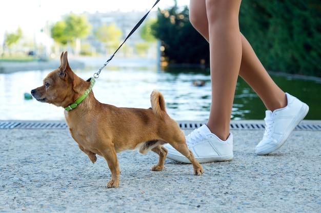 Mooie jonge vrouw die met haar hond in het park loopt.