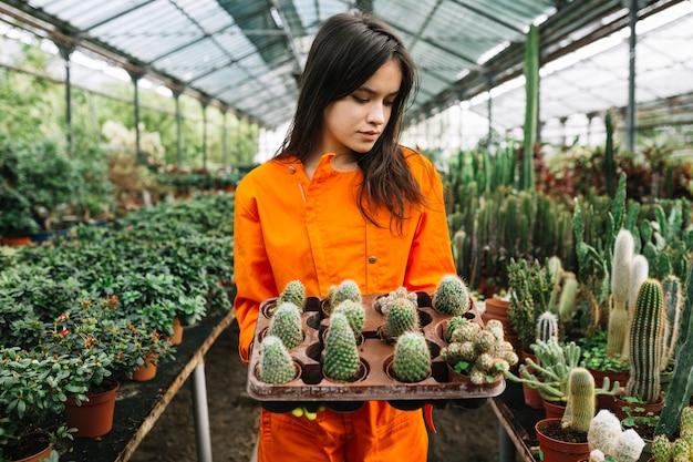 Mooie jonge vrouw die succulente planten in de kas