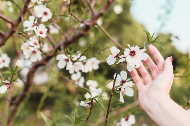 Mooie jonge vrouw handen rond amandel bloemen in de boom met groene achtergrond van bladeren en takken in het voorjaar