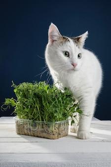 Mooie jonge witte kat staat in de buurt van jonge spruiten van groene erwten