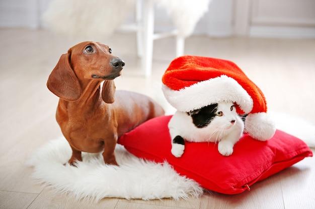 Mooie kat en teckelhond op tapijt, binnen