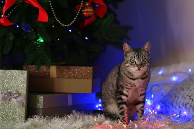 Mooie kat in de buurt van kerstboom met decoratie