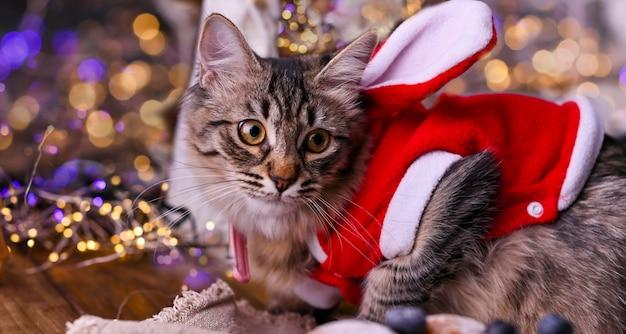 Mooie kat in een kerstman hoed.