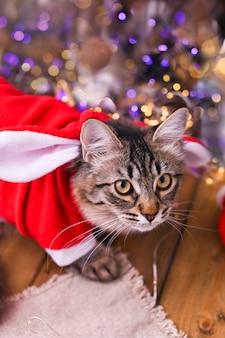 Mooie kat in kleding van de kerstman.