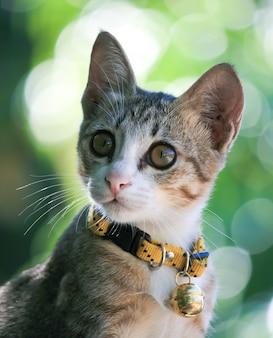 Mooie kat kitten