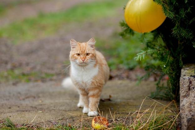 Mooie kat komt buiten in de natuur