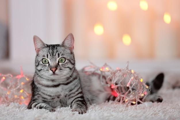 Mooie kat op lichte achtergrond
