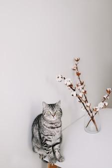 Mooie kat poseren met bloemen op witte ondergrond binnenshuis indoor