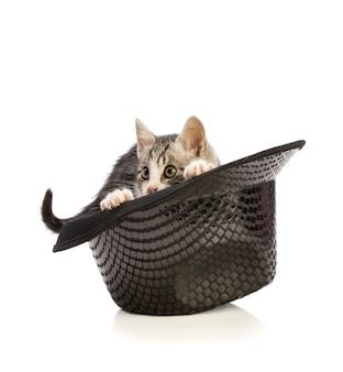 Mooie kitten in hoed