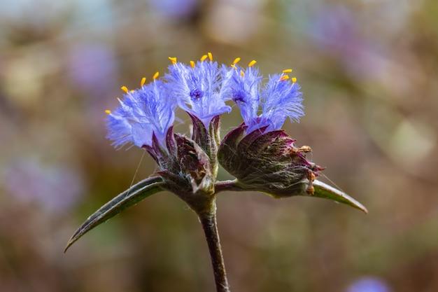 Mooie kleine bloemen in de natuur
