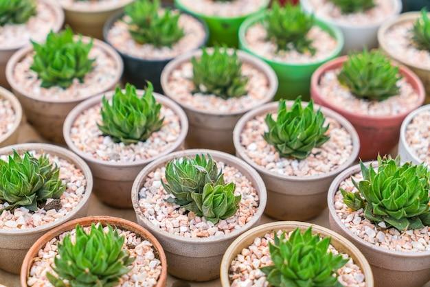 Mooie kleine cactus veld.