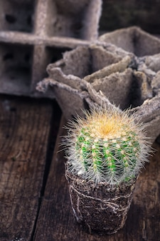 Mooie kleine cactus