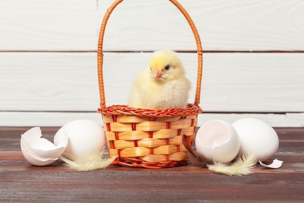 Mooie kleine kip in nest